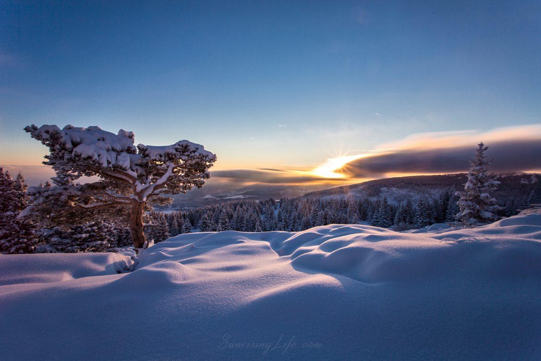 Зимен изгрев от дървото на Витоша