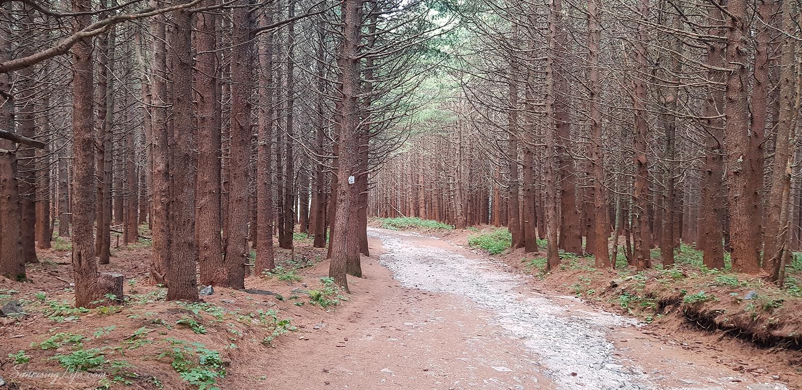 гората след алеко по пътя към черни връх