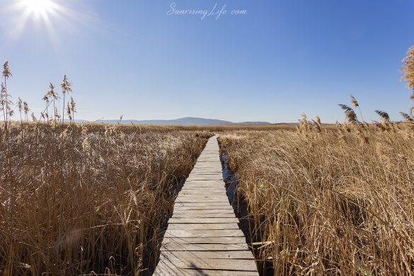 разходка около София - Драгоманско блато